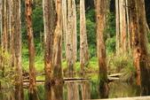 20130814-水漾森林:IMG_5628.JPG