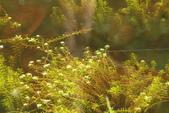 20130814-水漾森林:IMG_5631.JPG