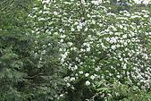 開麥拉-油柌花:IMG_5227.JPG