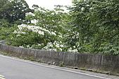 開麥拉-油柌花:_MG_5218.JPG