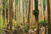 20130814-水漾森林:IMG_5605.JPG