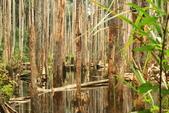 20130814-水漾森林:IMG_5636.JPG