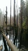 20130814-水漾森林:IMAG0560.jpg