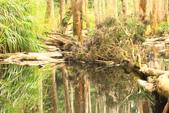 20130814-水漾森林:IMG_5614.JPG