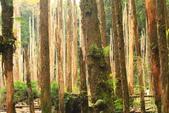 20130814-水漾森林:IMG_5615.JPG