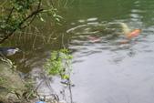 20161021-宜蘭梅花湖:IMG_7468.JPG