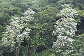 開麥拉-油柌花:IMG_5209.JPG