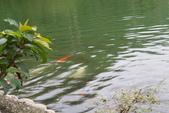 20161021-宜蘭梅花湖:IMG_7463.JPG