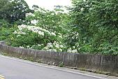 開麥拉-油柌花:IMG_5219.JPG