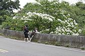 開麥拉-油柌花:_MG_5216.JPG