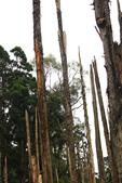 20130814-水漾森林:IMG_5623.JPG