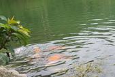 20161021-宜蘭梅花湖:IMG_7462.JPG