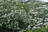 開麥拉-油柌花:IMG_5222.JPG