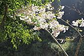 杉林溪-20110415:_MG_0806.JPG