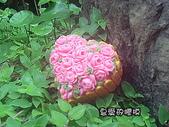 土司模與皂盤:玫瑰花園(3)連模
