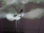 我的天使MIU MIU帥到掉渣!!:1299861662.jpg