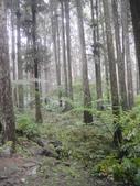 溪頭森林遊樂區~鴻達旅遊~2014/6/15(日):DSC02429.JPG