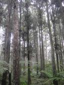 溪頭森林遊樂區~鴻達旅遊~2014/6/15(日):DSC02430.JPG