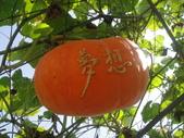 造橋南瓜節2014/6/12(四)~鴻達旅遊~:DSC02222.JPG