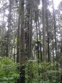 溪頭森林遊樂區~鴻達旅遊~2014/6/15(日):DSC02432.JPG