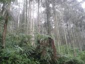 溪頭森林遊樂區~鴻達旅遊~2014/6/15(日):DSC02434.JPG