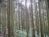 馬武督探索森林(憶之旅~103.07.28.(一):DSC03237.JPG
