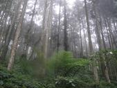 溪頭森林遊樂區~鴻達旅遊~2014/6/15(日):DSC02436.JPG