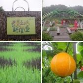 綠博+龍潭湖-泰山志工協會一日遊2014/5/1.:相簿封面