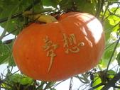 造橋南瓜節2014/6/12(四)~鴻達旅遊~:DSC02235.JPG