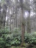 溪頭森林遊樂區~鴻達旅遊~2014/6/15(日):DSC02425.JPG