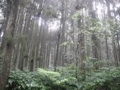 溪頭森林遊樂區~鴻達旅遊~2014/6/15(日):DSC02426.JPG