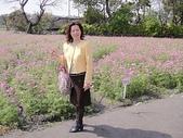 中社觀光花市:DSC00499.JPG