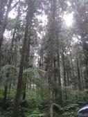 溪頭森林遊樂區~鴻達旅遊~2014/6/15(日):DSC02428.JPG