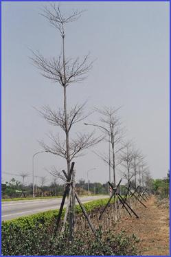 木麻黃與金門:草花2.jpg