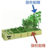 木麻黃與金門:演替.jpg