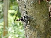 蝴蝶:DSCF1693