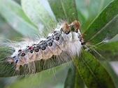蛾:DSCF4572