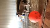 107.06.14 橙橙(107.11.03到新家了):6A05FBDA-FE7D-4E95-A198-E74C29EFE8DA.jpeg