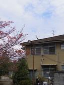 2015-10月-京都:哲學之鳥