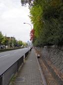 2015-10月-京都:京都御苑
