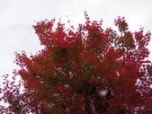 2015-10月-京都:IMGP0189.JPG