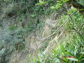 雪山尾稜南段+灣坑頭20131117:雪山尾稜南端+灣坑投下大里 082.JPG