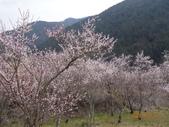 104年武陵農場櫻花季一日行20150211:DSC05473.JPG
