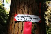 神木村、神阿古道縱走、姊妹潭、水山神木(第一天)20210202:IMG_0983.JPG