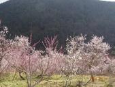 104年武陵農場櫻花季一日行20150211:DSC05485.JPG