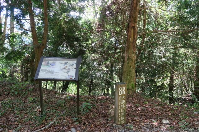 大鹿林道東線→九九山莊20190901:IMG_1039.JPG