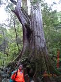 司馬庫斯神木群越嶺鴛鴦湖外圍出100林道20150715:DSC01687.JPG