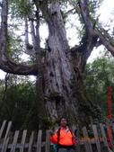 司馬庫斯神木群越嶺鴛鴦湖外圍出100林道20150715:DSC01691.JPG