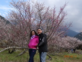 104年武陵農場櫻花季一日行20150211:DSC05478.JPG