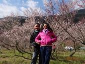 104年武陵農場櫻花季一日行20150211:DSC05480.JPG